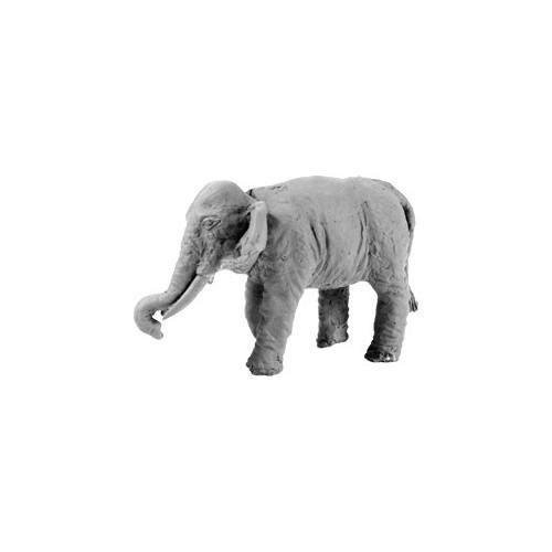 Indian Elephant (Bare)